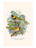 Melodius or Cuba Finch Premium Giclee Print by F.w. Frohawk