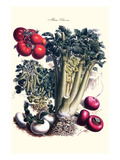 Vegetables; Turnip, Raddish, Tomato, Celery, and Peas Prints by Philippe-Victoire Leveque de Vilmorin