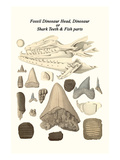 Fossil Dinosaur Head, Dinosaur or Shark Teeth and Fish Parts Prints by James Parkinson