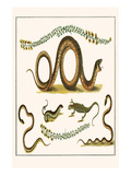 Southern Smooth Snake, Grasss Snakes, Wall Lizard,, Sand Lizard and Trefoil Poster by Albertus Seba