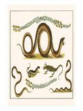 Southern Smooth Snake, Grasss Snakes, Wall Lizard,, Sand Lizard and Trefoil Print by Albertus Seba