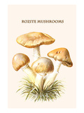 Rozite Mushrooms Posters by Edmund Michael