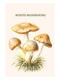Rozite Mushrooms Premium Giclee Print by Edmund Michael