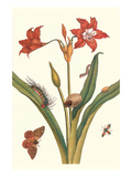 Nocturnal Moth Caterpillar on a Barbados Lilly and a Coreidae Bug Kunstdrucke von Maria Sibylla Merian