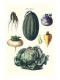 Vegetables; Melon, Turnip, Lettuce, Cabbage, Prints by Philippe-Victoire Leveque de Vilmorin
