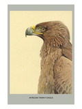African Tawny Eagle Posters by Louis Agassiz Fuertes