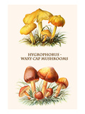 Hygrophorus - Waxy Cap Mushrooms Poster by Edmund Michael