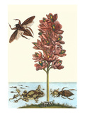 Common Water Hyacinth with a Veined Tree Frog and a Giant Water Bug Prints by Maria Sibylla Merian