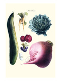 Vegetables; Cucumber, Raddish, Tuber, Artichoke Prints by Philippe-Victoire Leveque de Vilmorin
