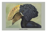 Crested Hornbill Poster by Louis Agassiz Fuertes