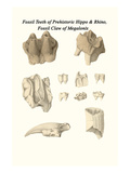 Fossil Teeth of Prehistoric Hippo and Rhino, Fossil Claw of Megalonix Art by James Parkinson