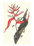 Heliconia and Potter Wasp Kunstdrucke von Maria Sibylla Merian