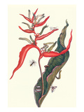 Heliconia and Potter Wasp Print by Maria Sibylla Merian