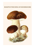 Boletus the King of Mushrooms Premium Giclee Print by Edmund Michael