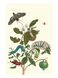 Guava and Tobacco Hornworm and a Podalia Moth Poster by Maria Sibylla Merian