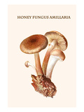Honey Fungus Amillaria Art by Edmund Michael