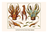 Land Hermit Crab, Norway Lobster, Shrimp, Amphopods Prints by Albertus Seba