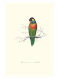 Variegated Parakeet - Trichoglossus Versicolor Poster von Edward Lear