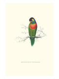 Variegated Parakeet - Trichoglossus Versicolor Posters by Edward Lear