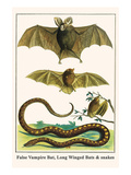 False Vampire Bat, Long Winged Bats and Snakes Poster by Albertus Seba