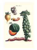 Vegetables; Brussel Sprouts, Yam, Potato, Sweet, Cantelope, Melon, Mushroom Prints by Philippe-Victoire Leveque de Vilmorin