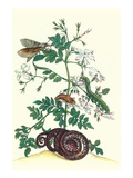 Royal Jasmine with an Amazon Tree Boa and an Ello Sphinx Moth Art by Maria Sibylla Merian