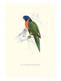 Scarlet-Collerd Parakeet - Trichoglossus Rubritorquis Posters by Edward Lear