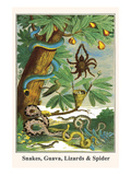 Snakes, Guava, Lizards and Spider Kunst von Albertus Seba