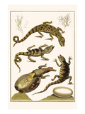 Crocodiles and Plants Posters af Albertus Seba