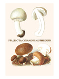 Psalliota Common Mushroom Posters by Edmund Michael