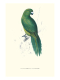 Uniform Parakeet - Cyanoramphus Unicolor Kunstdrucke von Edward Lear