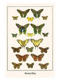 Butterflies Poster by Albertus Seba
