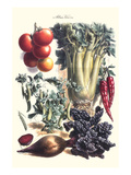 Vegetables; Beet, Hot Peppers, Celery, Tomatoes, and Peas in Pods Art by Philippe-Victoire Leveque de Vilmorin