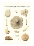 Fossil Coral, Joint of Fossil Ibis Bird and Madreporite Prints by James Parkinson