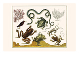Frogs, Lizards, Snakes, Birds and Plants Print by Albertus Seba
