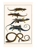 Lizards and Snakes Plakater af Albertus Seba