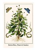 Butterflies, Plant and Snakes Posters by Albertus Seba