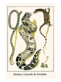 Snakes, Lizards and Orchids Print by Albertus Seba