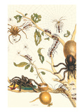 Tarantulas and Army Ants Prints by Maria Sibylla Merian