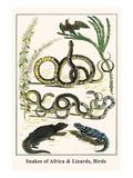 Snakes of Africa and Lizards, Birds Kunstdrucke von Albertus Seba