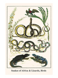 Snakes of Africa and Lizards, Birds Prints by Albertus Seba