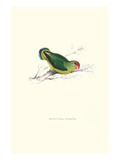 Abyssinian Parakeet - Agapornis Taranta Posters by Edward Lear