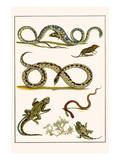 Snakes, Rats, Shrew, Adder, Viper Poster by Albertus Seba