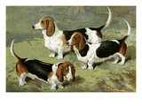 Basset Hounds Print by Vero Shaw