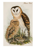 Barn Owl Poster by John Gould