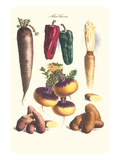 Vegetables; Bell Peppers, Turnips, Potato, Bok Choy and Tubers Poster by Philippe-Victoire Leveque de Vilmorin