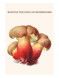 Boletus the King of Mushrooms Prints by Edmund Michael