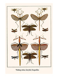 Walking Sticks, Katydid, Dragonflies Posters by Albertus Seba