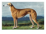 Greyhound Prints by Vero Shaw