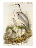 Heron Family Prints by John Gould